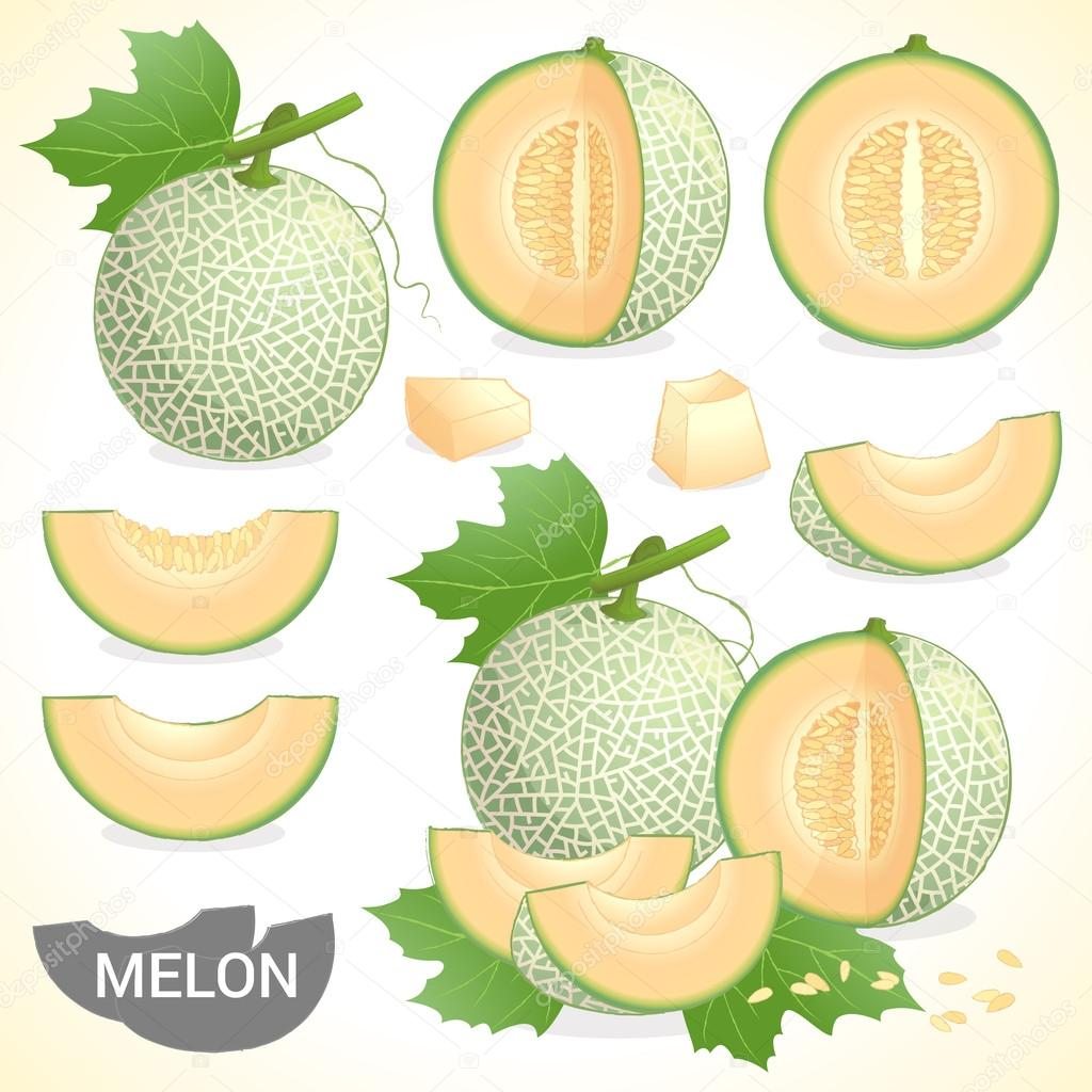 Set Of Cantaloupe Melon Fruit In Various Styles Vector Format Stock Vector C Beinluck 86548864 Select from premium cantaloupe images of the highest quality. https depositphotos com 86548864 stock illustration set of cantaloupe melon fruit html