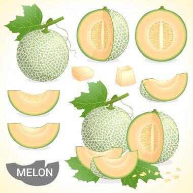 Set of cantaloupe melon fruit in various styles vector format