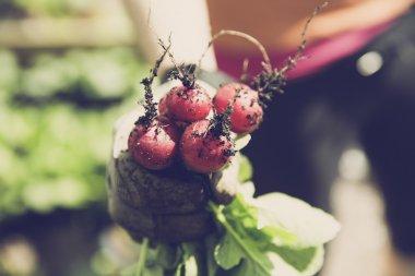 urban gardening bio garden radish