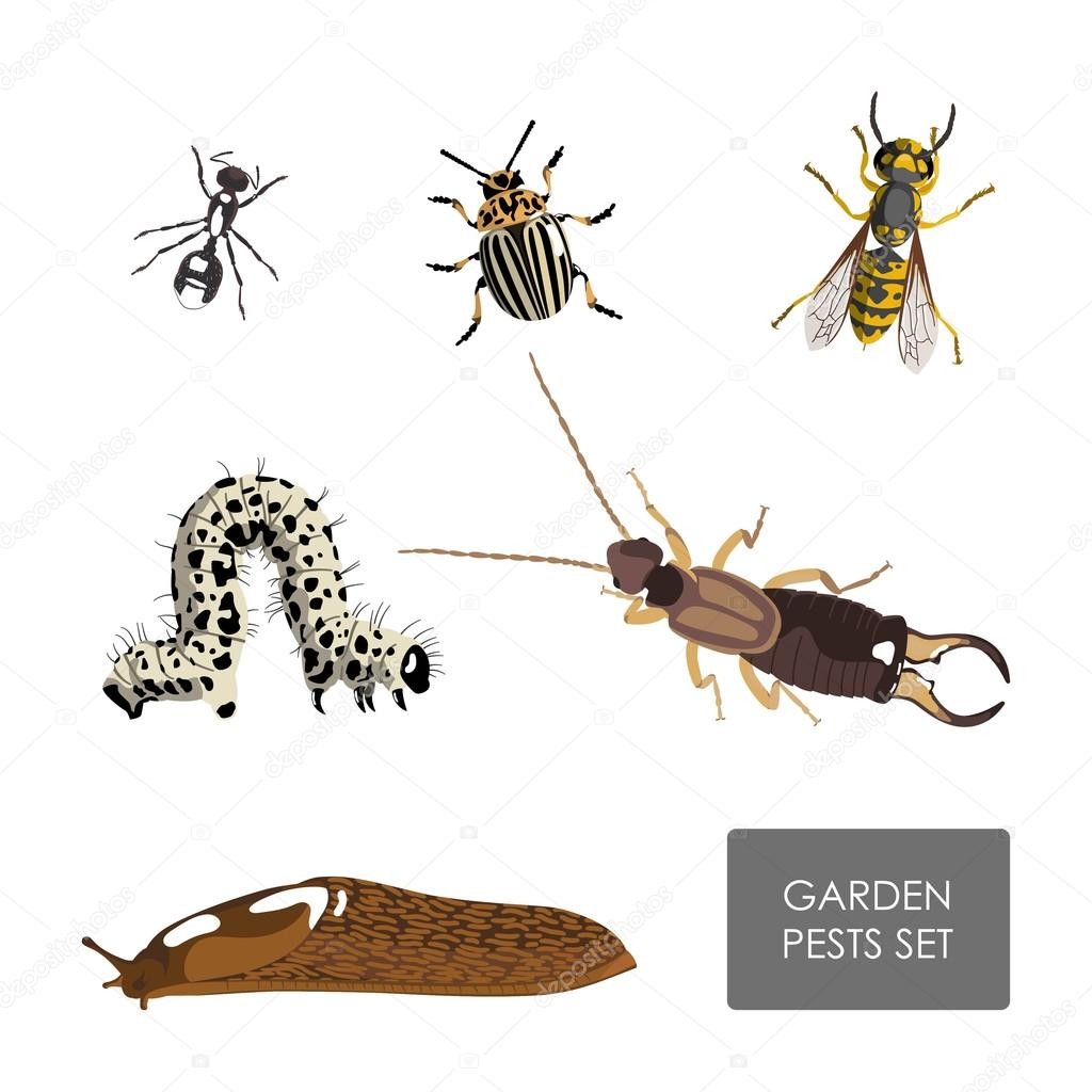Set of garden pests on a white background . Detailed drawing ins
