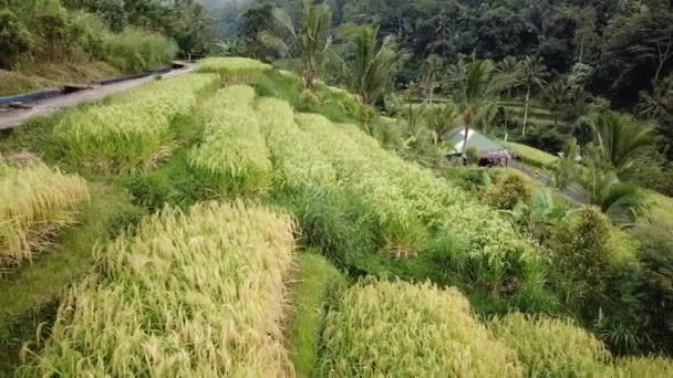 Jatiluwih rice plantation in bali