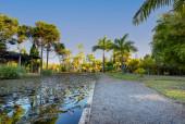 Ein Pfad zu Kokospalmen und Kiefern in einem öffentlichen Park bei Sonnenuntergang. See mit Wasservegetation. Natur.