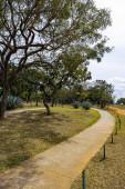 Ein Weg durch die Bäume in einem Park. Freizeit.