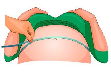 the dimension of the abdomen of a pregnant woman