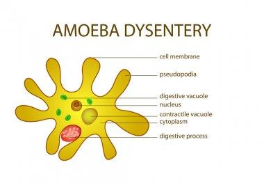 AMOEBA DYSENTERY