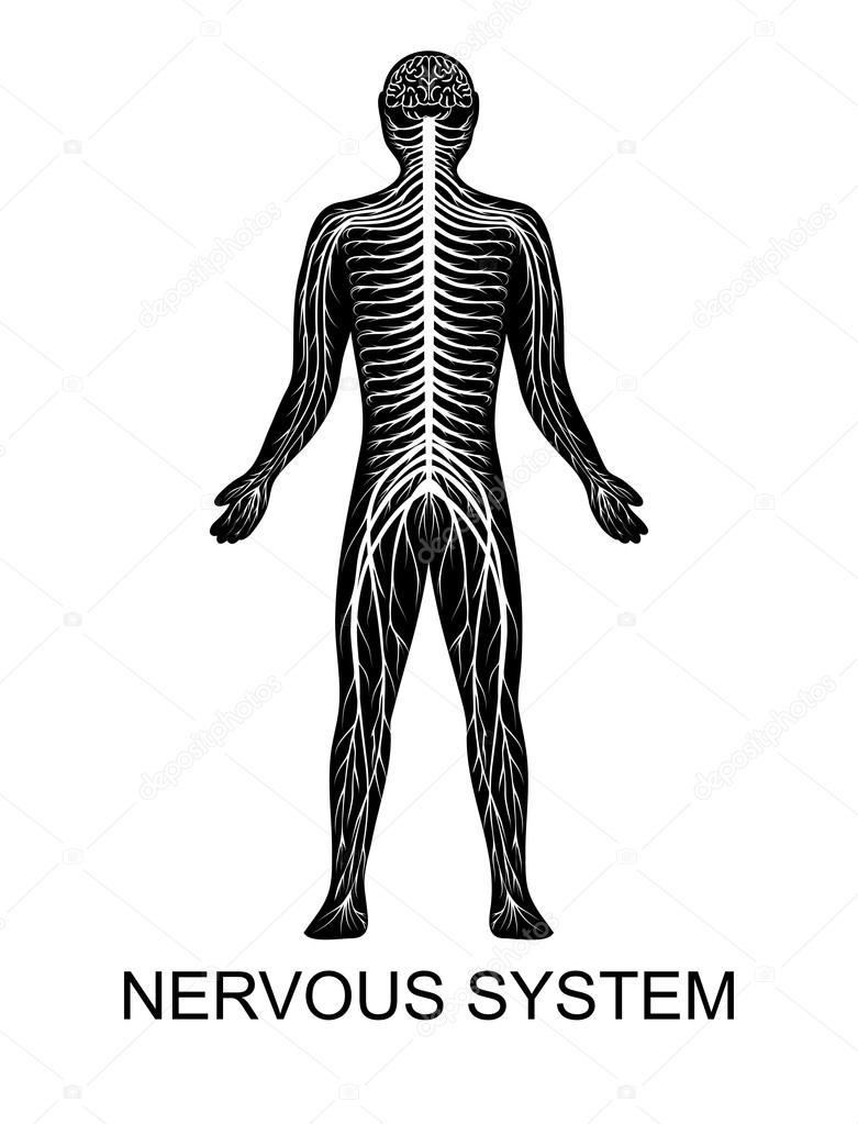 menschliche Nervensystem — Stockvektor © Artemida-psy #82804070