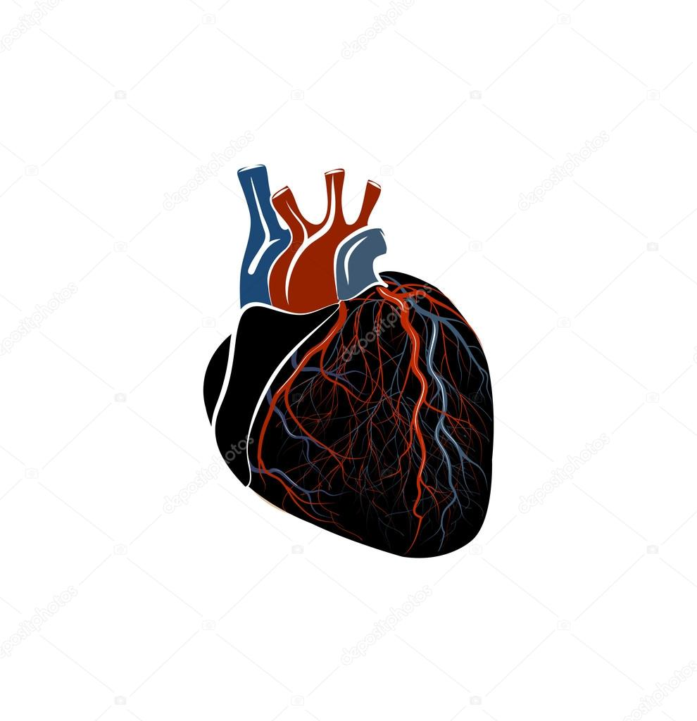 Anatomie des Herzens — Stockvektor © Artemida-psy #88109342