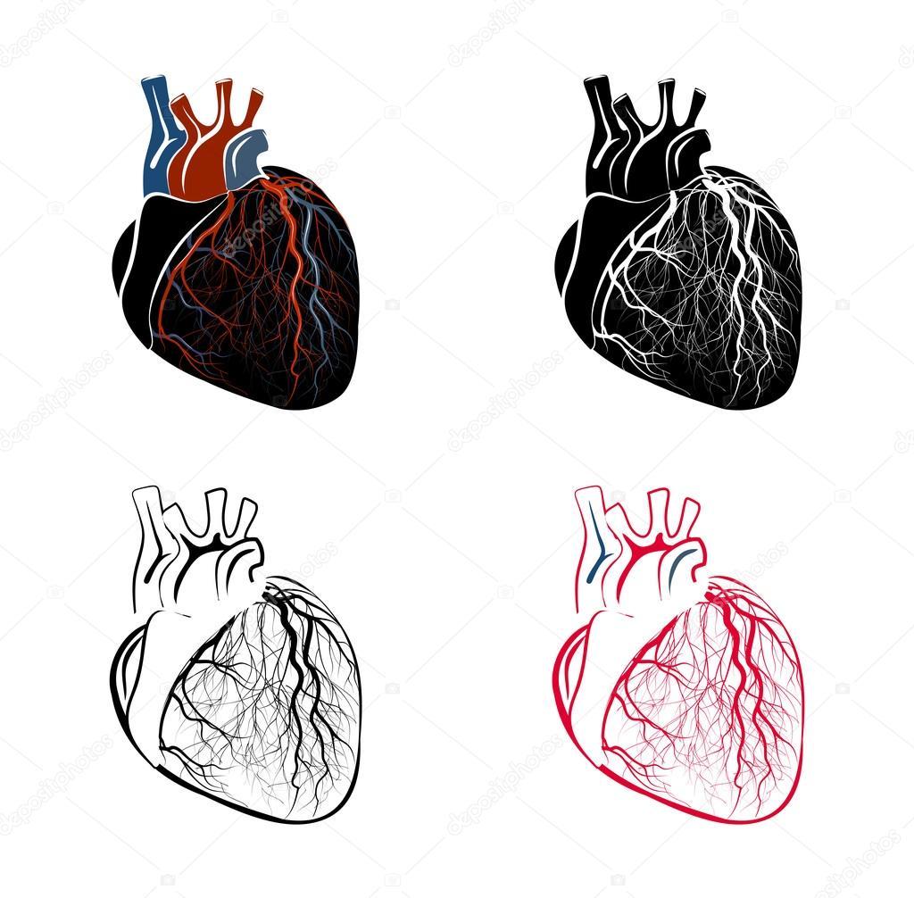 Anatomie des Herzens — Stockvektor © Artemida-psy #88109420