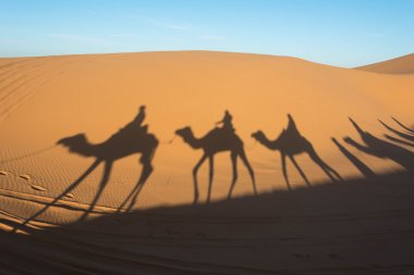 Camel shadow on the sand dunes in Sahara desert, Morocco