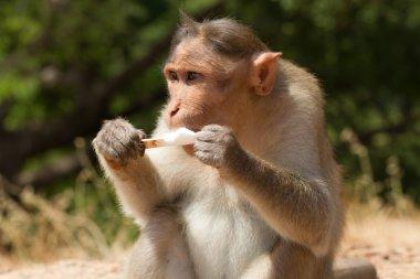 Year of the Monkey. Wine ice cream. Vanilla sommelier.
