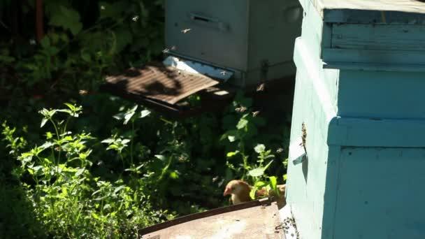 Včelín s včelami