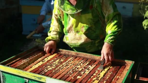 Imker sammelt Honig