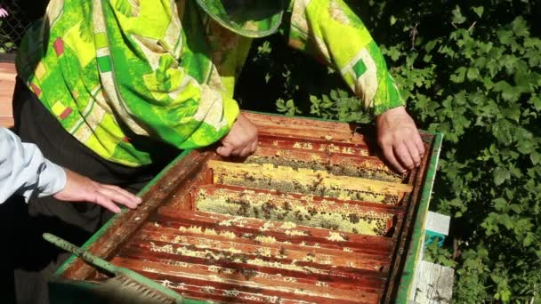 Beemaster collects honey