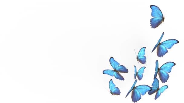 nyári kék pillangók repülése. pillangó könnyű háttérrel. 3D-s renderelés
