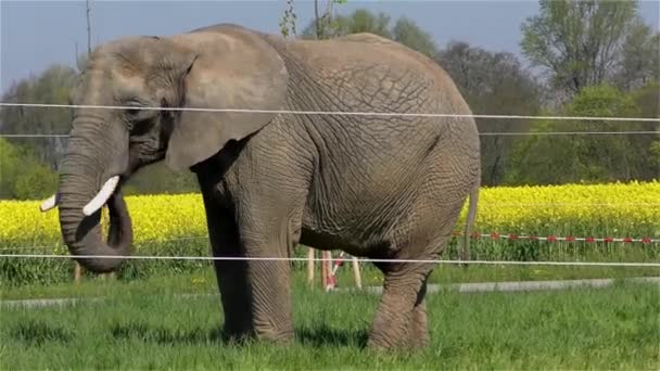 Cirkusu slona Uhd 2160 4 k