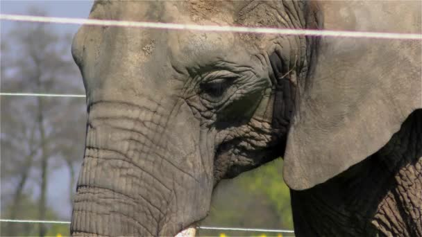 Cirkuszi elefánt Uhd 2160 4 k