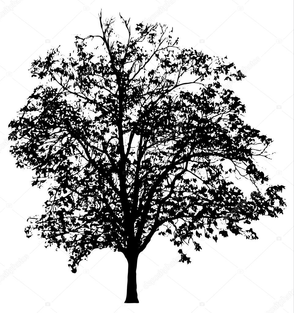 Tree silhouette, vector illustration