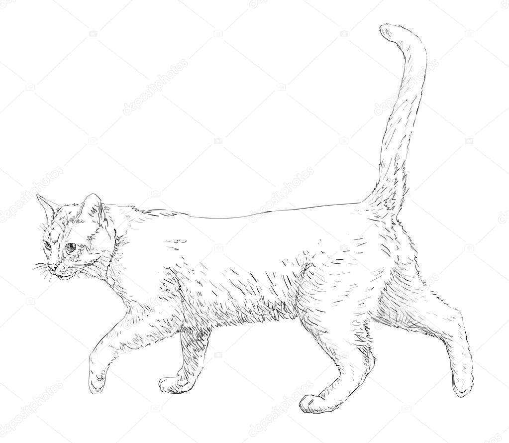 Line Art Design Illustration : Kot rysunek linii sztuka — grafika wektorowa