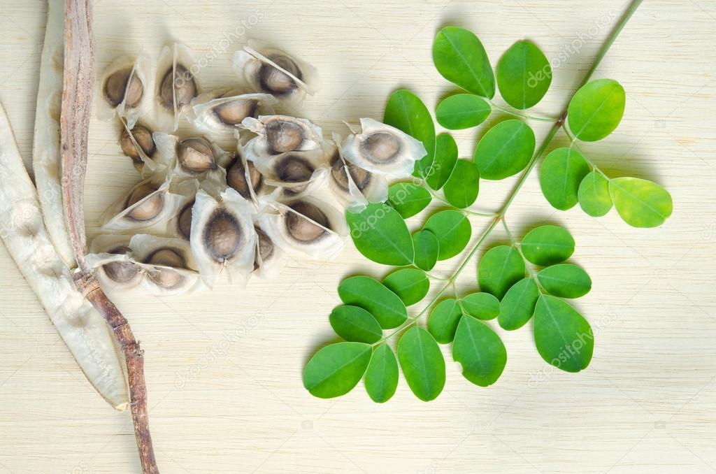 Moringa leaf and seed on wooden board background
