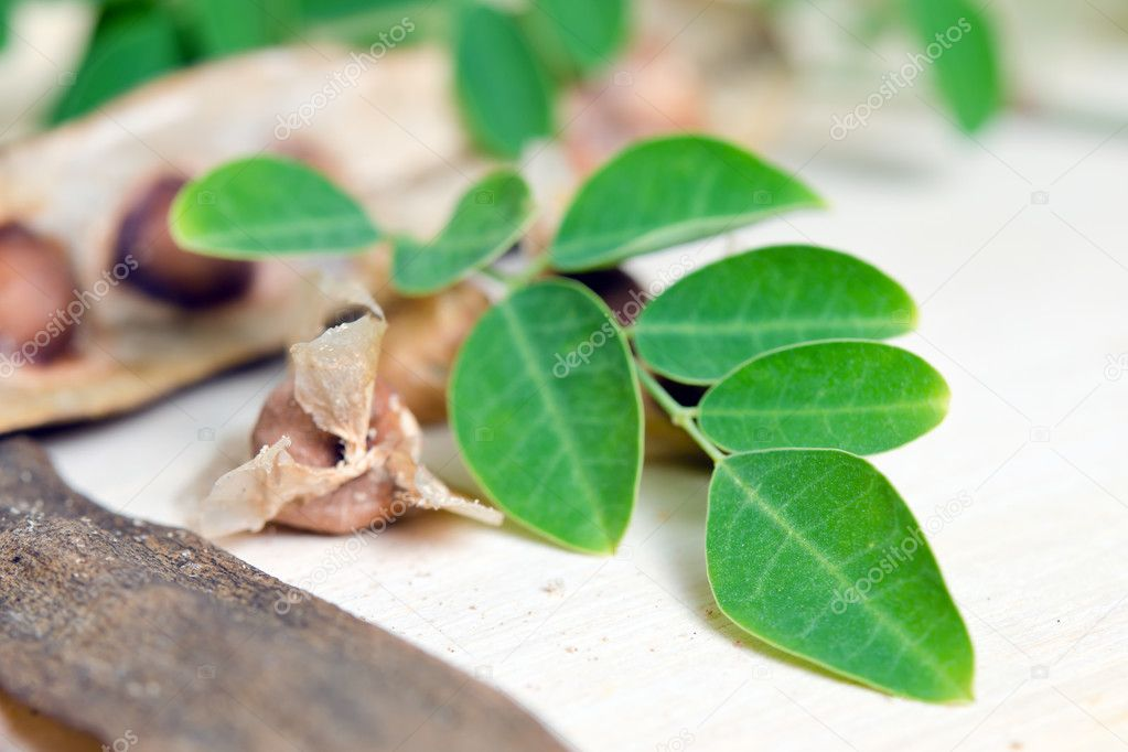 Moringa leaf and seed on wood background
