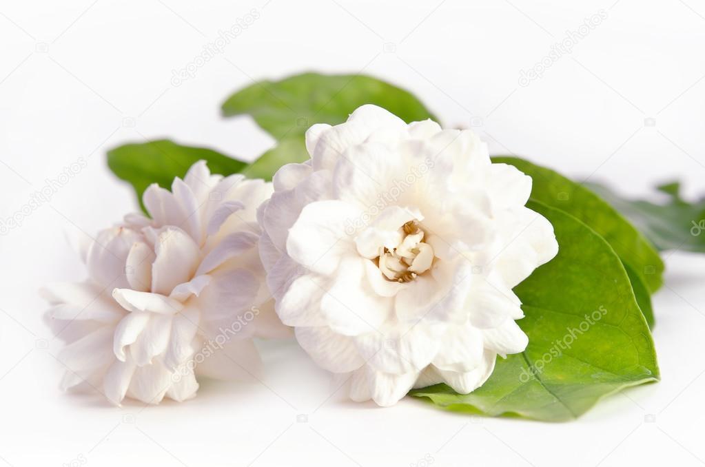 Bedwelming Bloem achtergrond van jasmijn bloemen verspreiden op witte &LU74