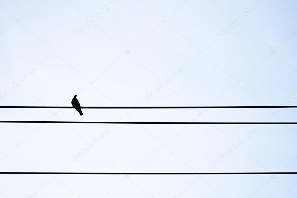 Kontur-Taube auf elektrischer Draht — Stockfoto © mantinov #100916294