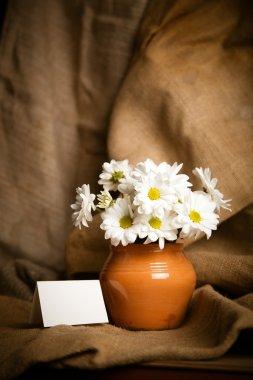 Chrysanthemums flowers. White flowers