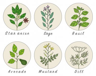Set of spices, herbs and officinale plants icons.