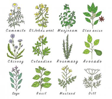 Set of spices, herbs and officinale plants icons. Healing plants