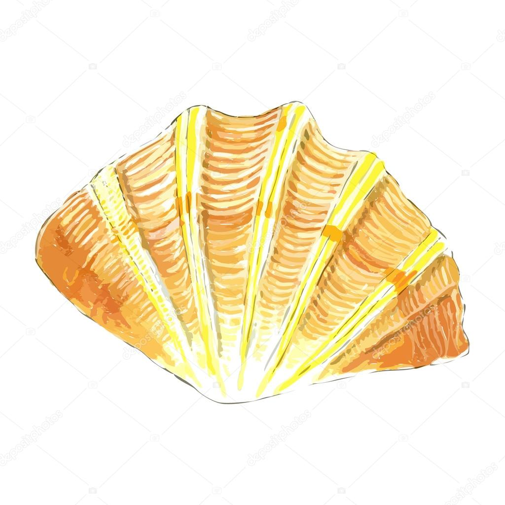 Sea shell in yellow and orange colors