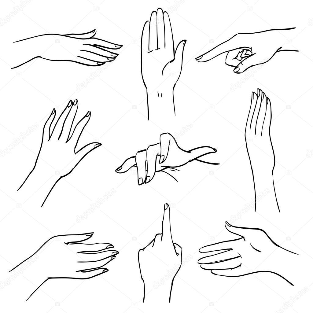 Conjunto de manos y dedos en diferentes posiciones y gestos ...