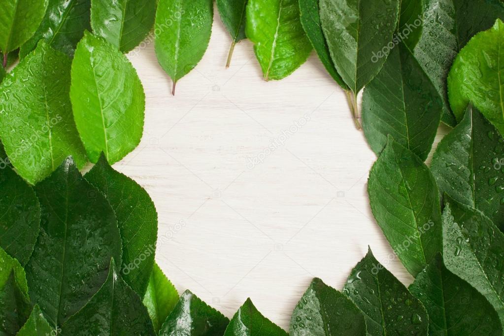 Marco de madera fondo de hojas de color verde, blanco — Foto de ...