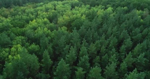zelený les flyover krajina stromy