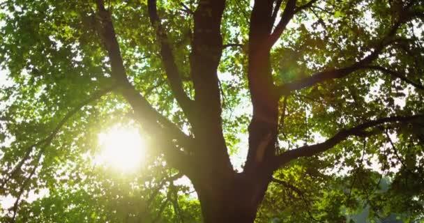 zelené lesní lesy východ slunce strom listy čočka světlice