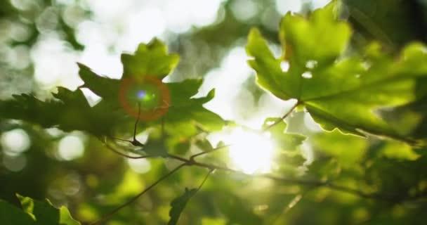 lesní olistění bokeh světle zelené listy čočka světlice