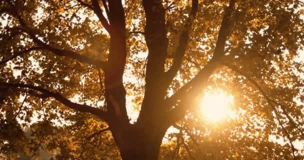 autumn sunrise forest scenery golden tree foliage