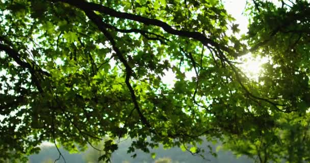 lesní scenérie zelené listí strom větev listy