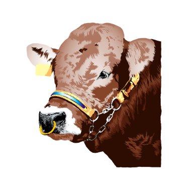 Brown german Braunvieh bull realistic illustration