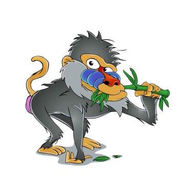 Baboon eating bamboo
