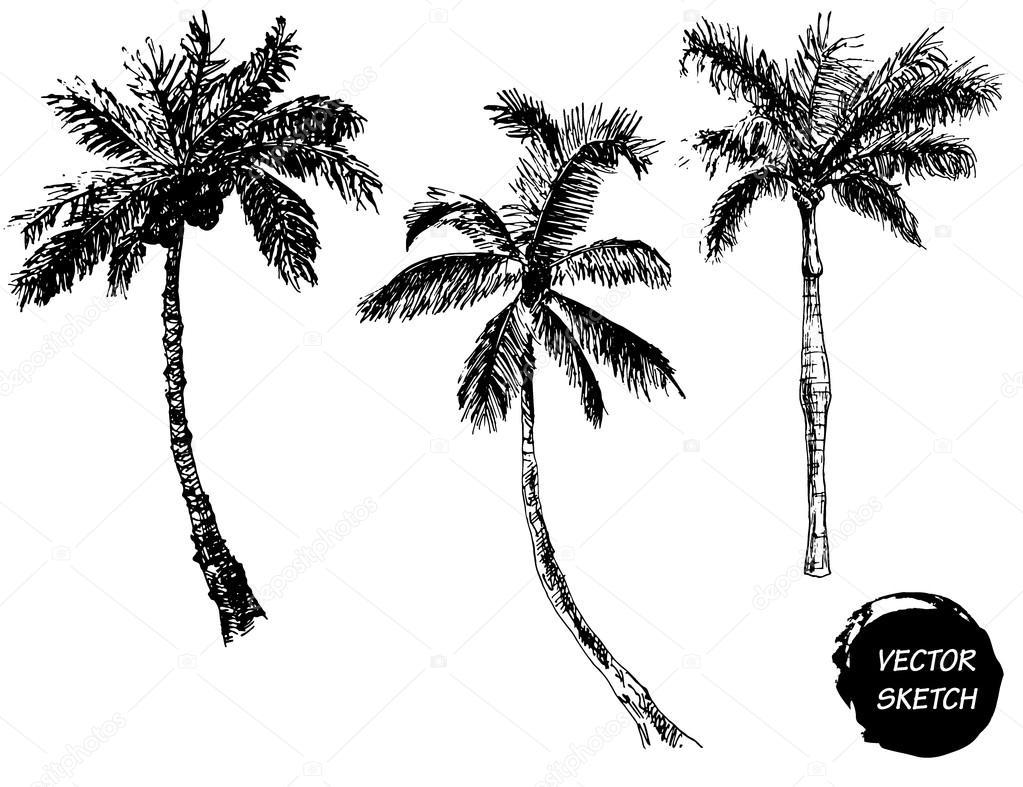 Palm Tree Sketch A