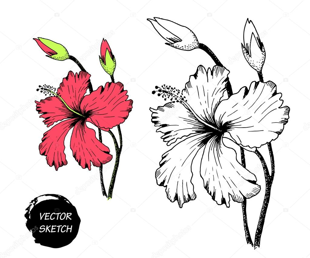 Flores Tropicales En Dibujo A Archivo Imagenes Vectoriales C Katyr