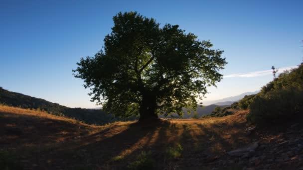 strom života, krásné záběry velkého stromu a modré oblohy