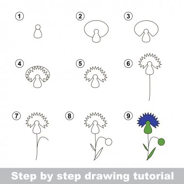 Drawing tutorial. How to draw a Cornflower