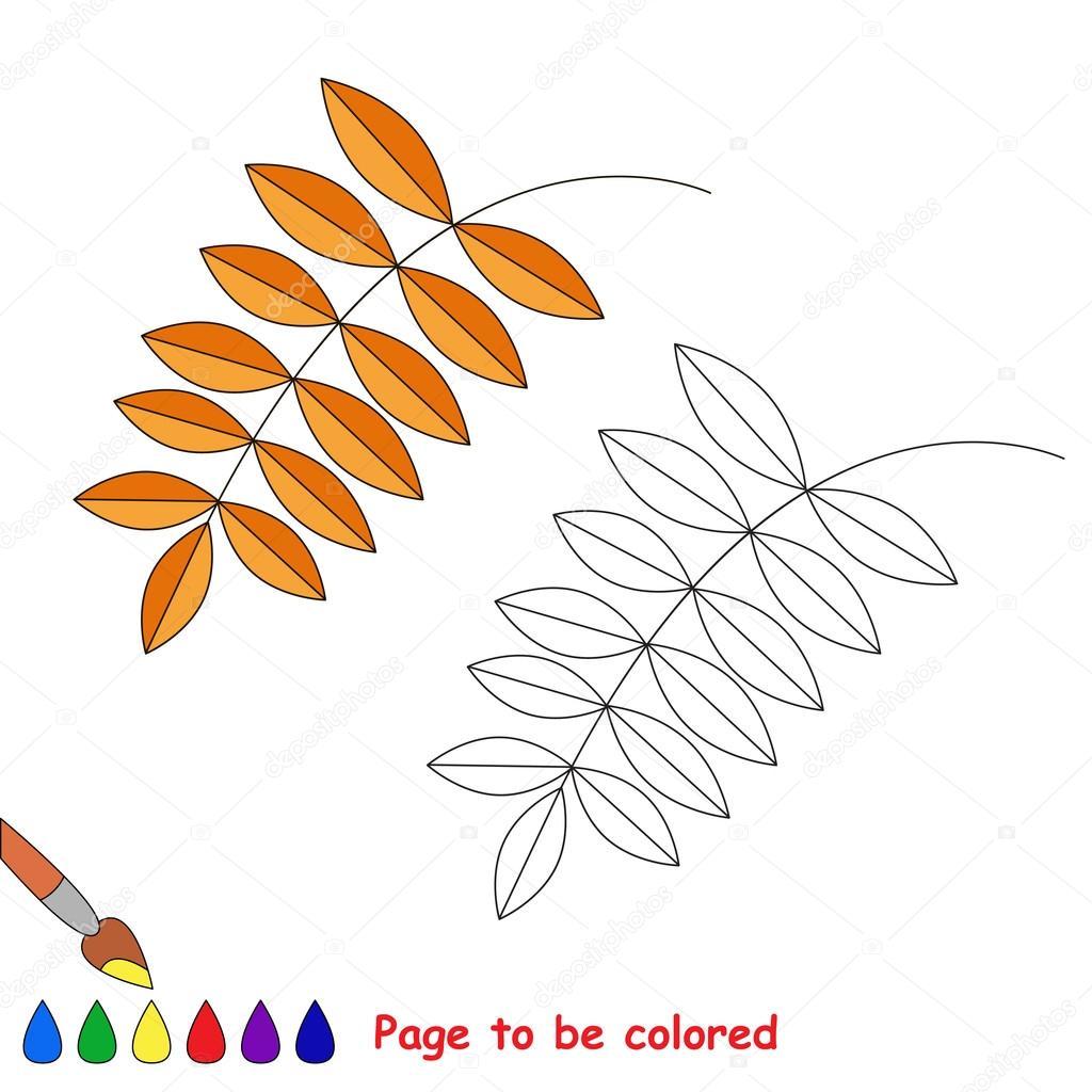Hoja de Fresno de dibujos animados de vector para colorear — Archivo ...