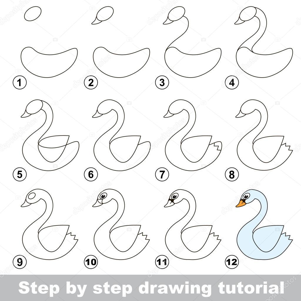 Tutorial De Dibujo Cómo Dibujar Un Cisne Blanco Archivo Imágenes