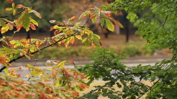 Chestnut and linden trees leaves at the rainy day.