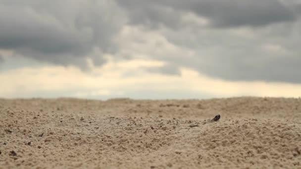 Schritte auf dem sand.