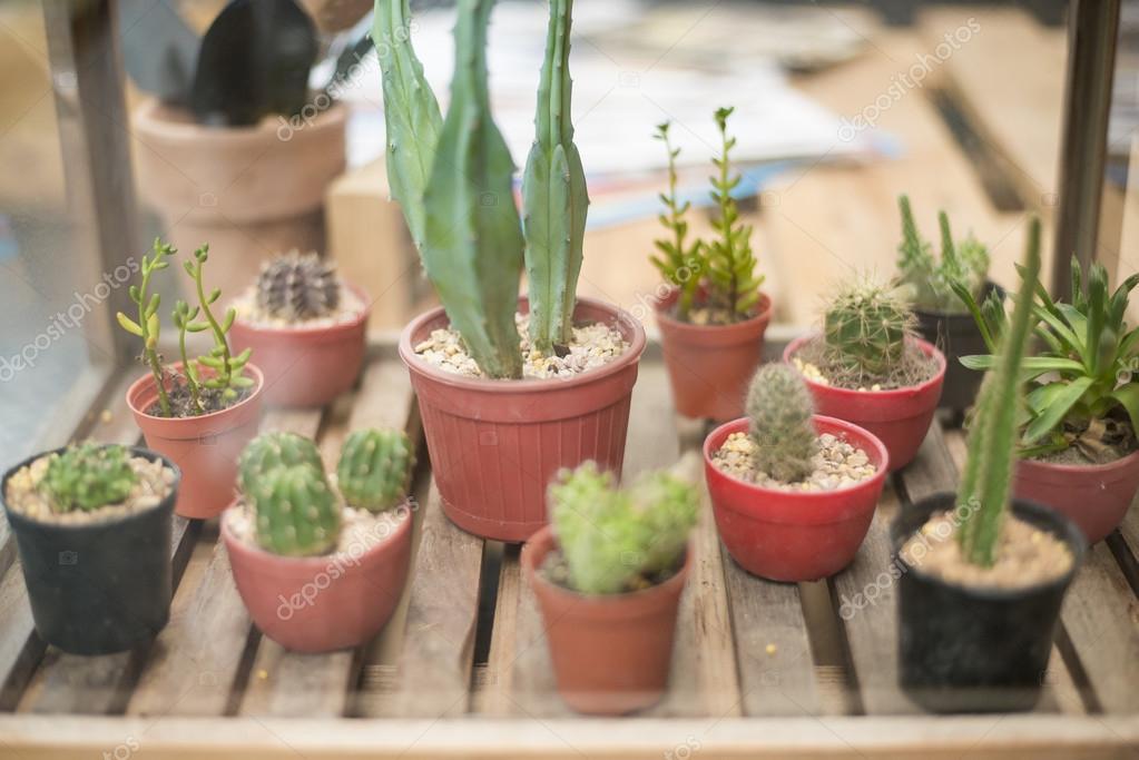 Doniczka Kaktus W Sklepie Roślin Zdjęcie Stockowe