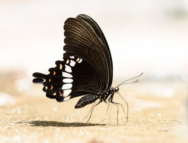 beautiful butterfly on the rocks near water nature