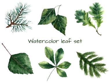 Watercolor leaves.